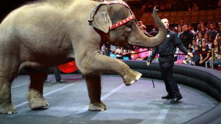 马戏团大象,大象在居民区撒野,还到处拉粑粑