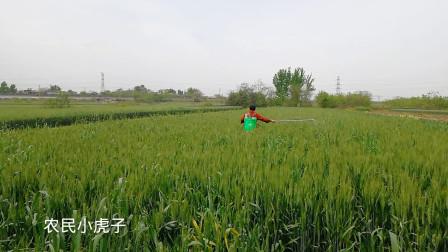 农村小伙包地七百亩,每天花三千多元人工打药施肥,2021扭转乾坤赚它一千万?