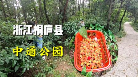 浙江桐庐县中通公园,没想到路边三月泡,比农村还多!