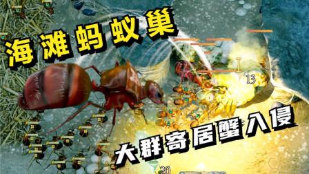 蚂蚁帝国:海滩洞穴,大群寄居蟹入侵!