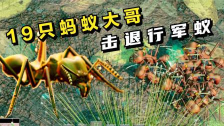 蚂蚁帝国:19只蚂蚁大哥,击退行军蚁!