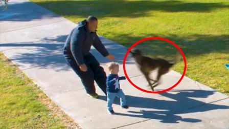 人贩子欲要抢走小男孩,危险时刻狗狗出手相救,镜头记录惊险时刻!