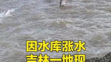 """因水库涨水, #吉林通化现""""鲤跃龙门""""景观,大哥拿渔网捞好久不得,被鱼儿灵活戏弄"""