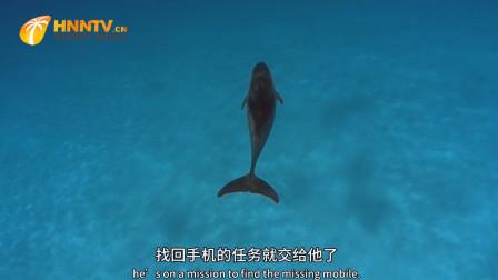 聪明的海豚帮美女找手机,本不抱有希望,哪知海豚技术实在太厉害