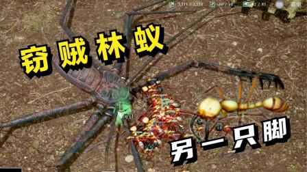 蚂蚁帝国:窃贼林蚁,另一只脚!