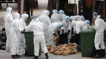 你是否疑惑过,禽流感病毒的源头出自哪?又有怎样不为人知的故事