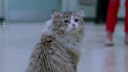 九条命02:猫咪爸爸为救儿子跳楼,结果却是一场乌龙