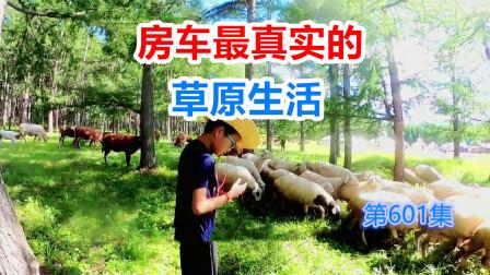 3辆拖挂房车安家草原深处,蒙古包羊群这才是房车旅行该有的样子