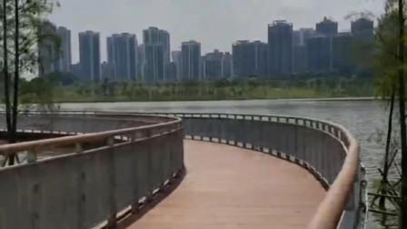 欣赏广州知识城九龙湖的美景,栈道湖光山色等,景色宜人