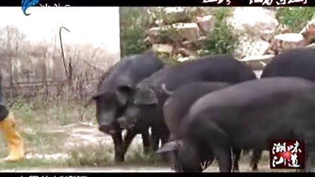 """★☆【奇事----饲养乌猪要给""""听音乐、上运动操""""】☆★"""
