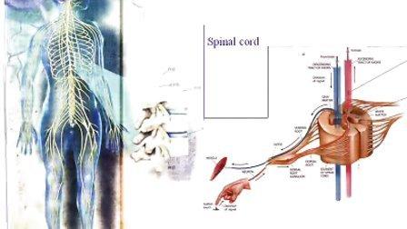 国家精品课程 视频教学 神经病学 神经内科 神经解剖21、神经系统(总论)(上)