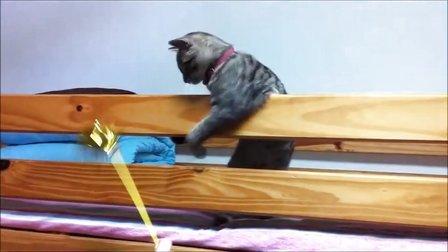 猫猫被主人用逗猫棒耍的快要疯了