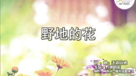 野地的花(天韵诗班·野地的花)-阿摩司·敬拜投影事工