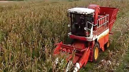 雷沃 莱州 玉米机