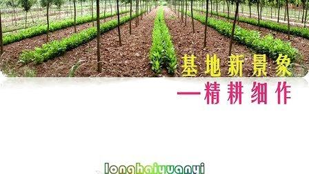 兰州市生态林业试验总场 陇海园艺 造林绿化苗木 竹芋 蝴蝶兰 仙客来 凤梨 红掌 马铃薯原原种