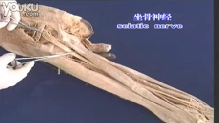 神经系统解剖6