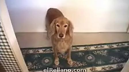 经典的拿狗做条件反射的实验