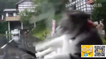 猫跟雨刷打架 飞扑玻璃窗差点摔到「倒头栽」