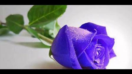 黄山蓝玫瑰广场舞等爱的玫瑰