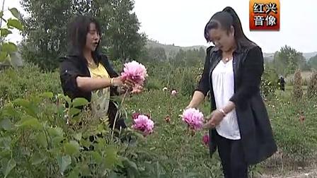 青海花儿《相思花儿赛牡丹》_高清
