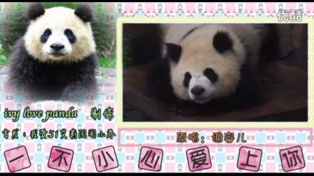 一只熊猫叫园润(2)——一不小心爱上你