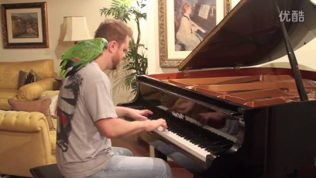 Angry Birds Theme on Piano with LIVE BIRDS!