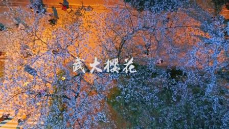 漫步在武汉大学樱花下