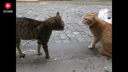 """猫咪开战前都要开启骂战!旁边的猫一脸""""蒙逼"""