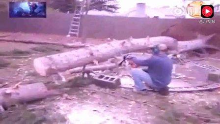 """树被锯断后突然""""站""""起来,把大家吓了一大跳"""