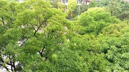 绿树成荫、浓荫如盖的校园