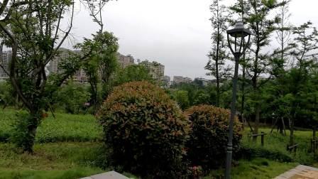 桃江河畔绿意葱茏