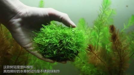 杜鹃根莫斯树水草树易养水草活体水族箱鱼缸造景草缸星球水族沉木水草装饰造景木