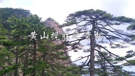 """动旅游Vlog 第一季 黄山""""四绝""""之奇松"""