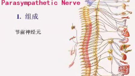 国家精品课程 视频教学 神经病学 神经内科 神经解剖18、神经系统(总论)(上)