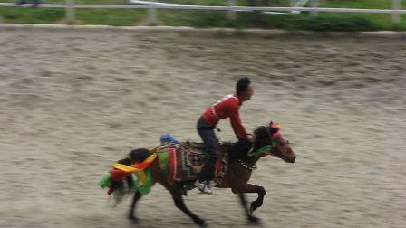藏民 赛马会 搞笑片段