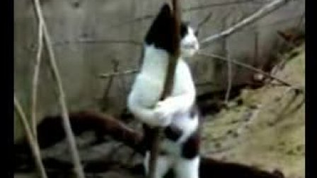 给我一根钢管,我能迷倒众生(猫?)