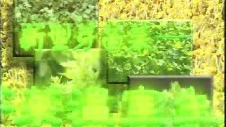濮阳市无土香椿芽种植