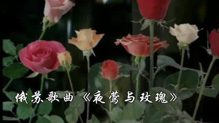 俄苏歌曲《夜莺与玫瑰》
