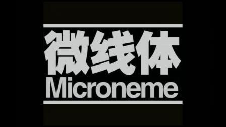 微线体MICRONEME