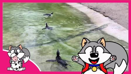 NUKI看企鹅 [Pinguin] 动物 Animals