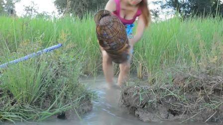 南亚美女稻田里抓鱼,这鱼也太多了
