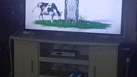 特仑苏有机奶–动物有机牧草篇