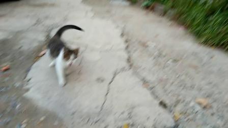 电厂附近酒库流浪猫