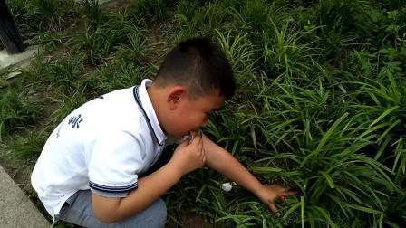 【快7岁】5-13哈哈跟奶奶一起发现了路边的野生草莓video_163811