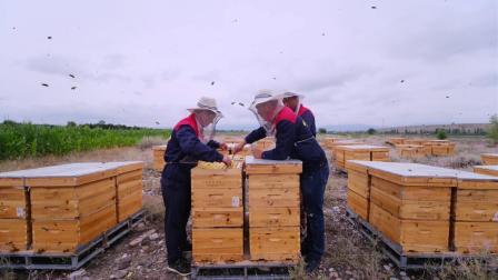 新疆新原养蜂合作社
