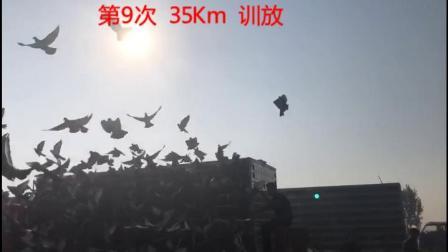 山东舜航赛鸽公棚9月23日35Km训放视频