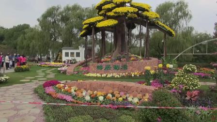 畅游上海市共青森林公园