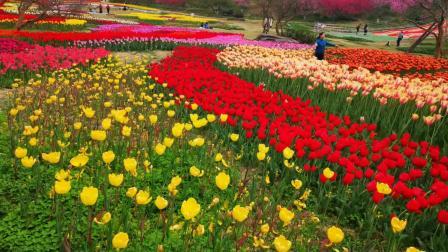 春天来了(图片部分来源于中旅摄网攀枝花站CTPN)