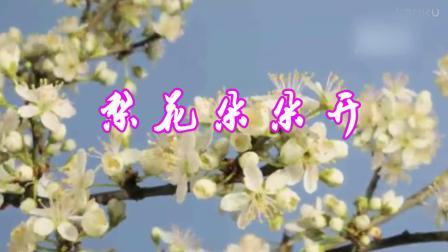 音乐欣赏:梨花开又放