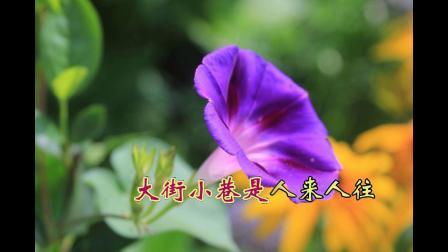 沈北新区喜洋洋广场舞《沈北新区:鲜花盛开》配乐:沈阳啊沈阳 带字幕1080p
